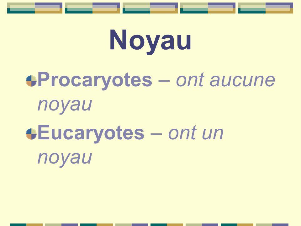 Noyau Procaryotes – ont aucune noyau Eucaryotes – ont un noyau