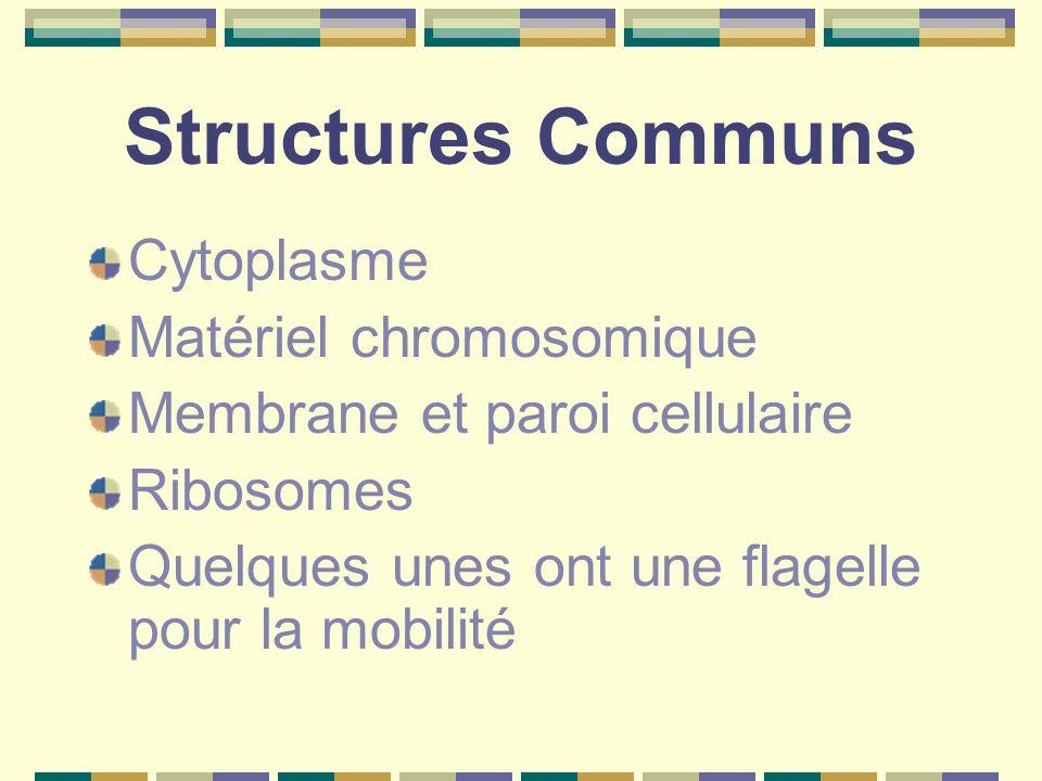 Structures Communs Cytoplasme Matériel chromosomique