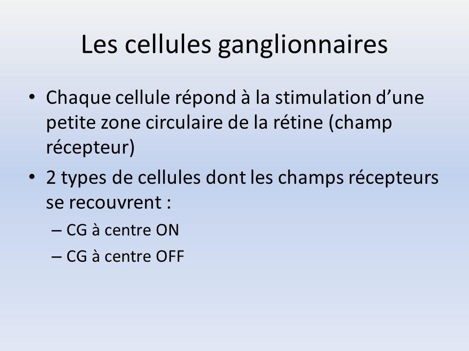 Les cellules ganglionnaires
