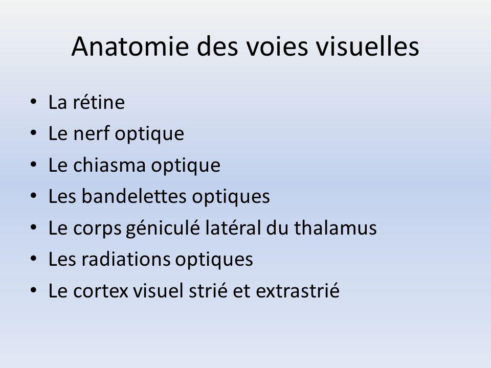 Anatomie des voies visuelles