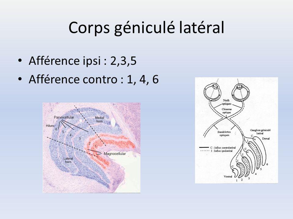 Corps géniculé latéral