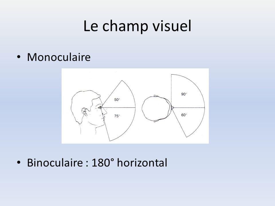 Le champ visuel Monoculaire Binoculaire : 180° horizontal