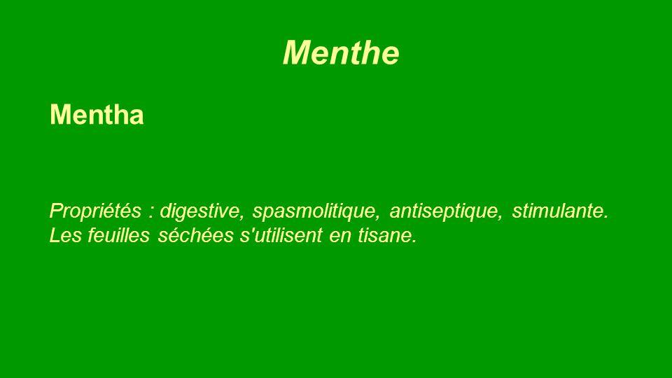 Menthe Mentha. Propriétés : digestive, spasmolitique, antiseptique, stimulante.