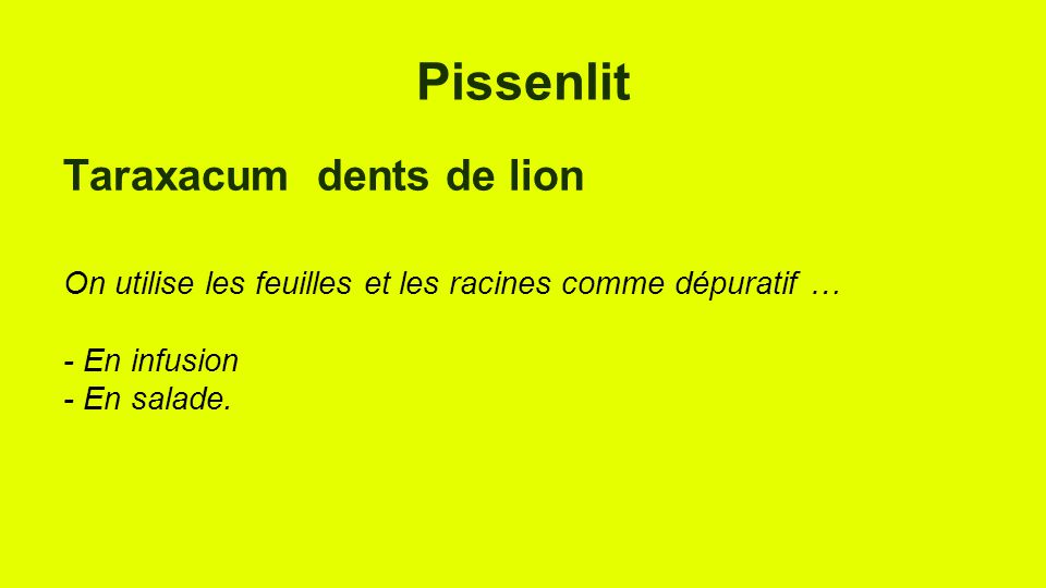 Pissenlit Taraxacum dents de lion