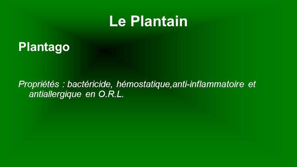 Le Plantain Plantago.