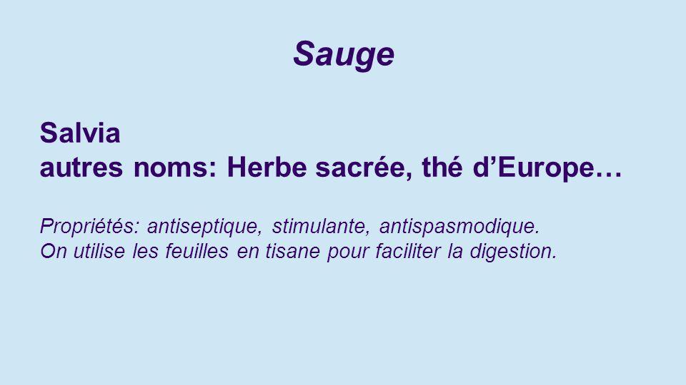Sauge Salvia autres noms: Herbe sacrée, thé d'Europe…