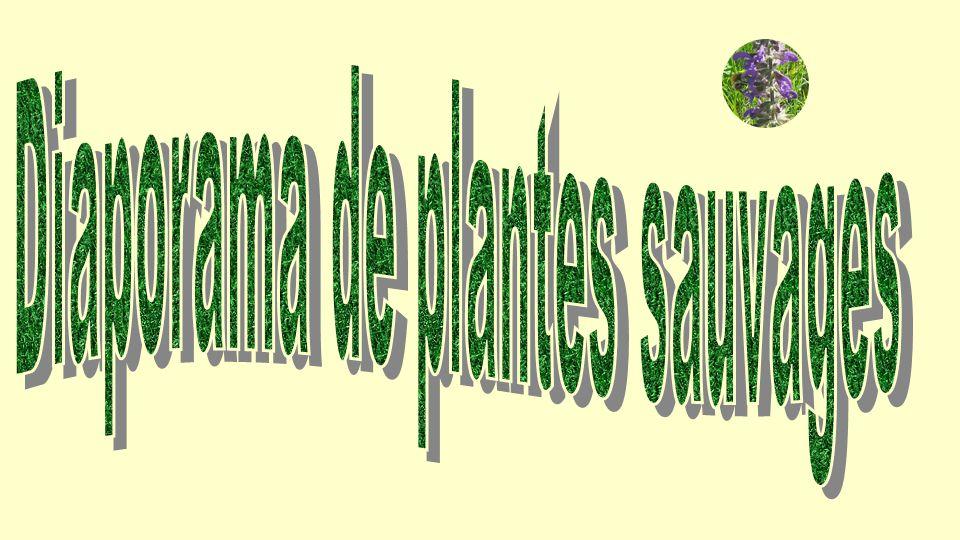Diaporama de plantes sauvages