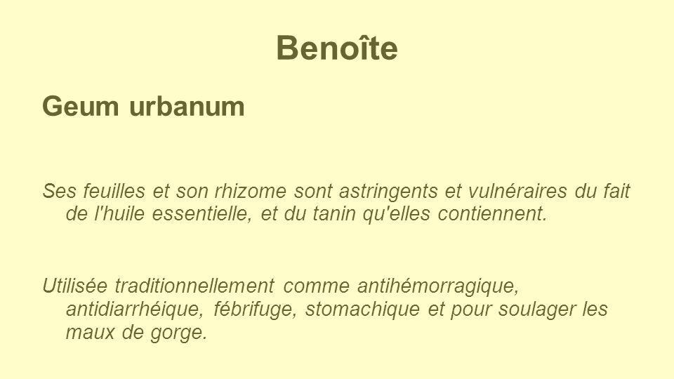 Benoîte Geum urbanum. Ses feuilles et son rhizome sont astringents et vulnéraires du fait de l huile essentielle, et du tanin qu elles contiennent.