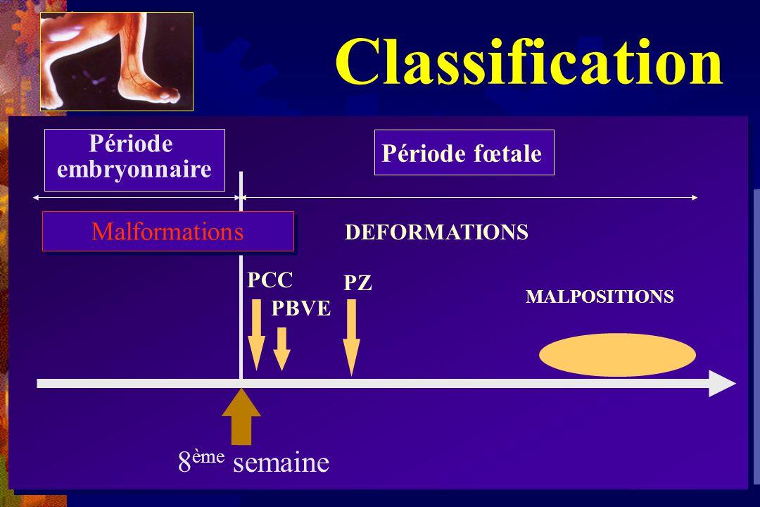Classification 8ème semaine Période embryonnaire Période fœtale
