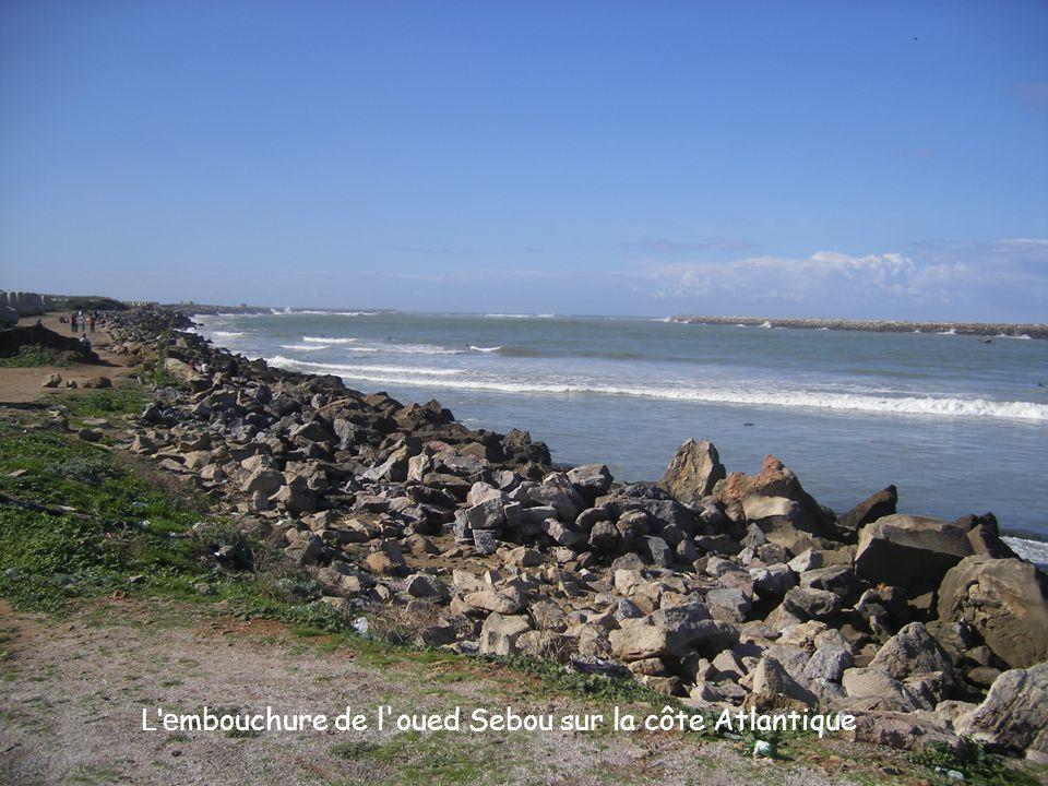 L embouchure de l oued Sebou sur la côte Atlantique