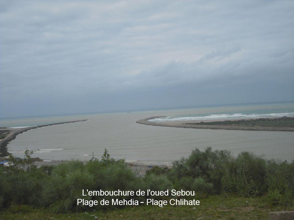 L embouchure de l oued Sebou Plage de Mehdia – Plage Chlihate