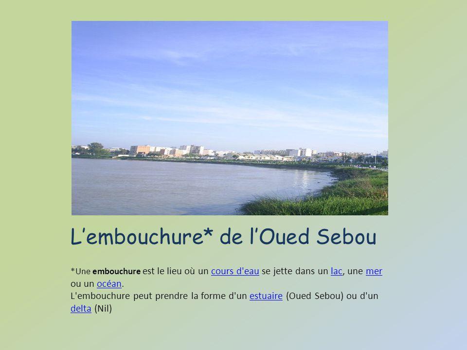 L'embouchure* de l'Oued Sebou