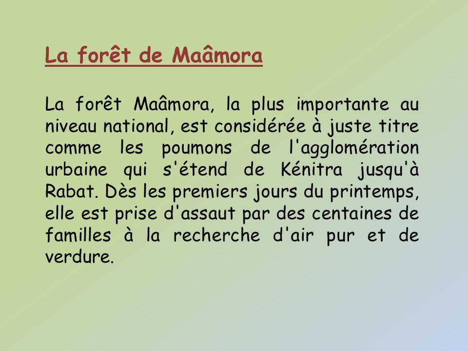 La forêt de Maâmora