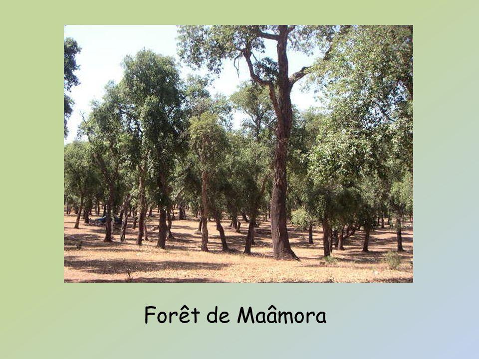 Forêt de Maâmora