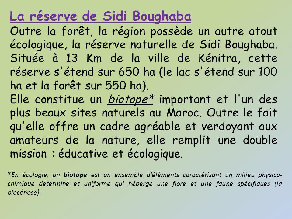 La réserve de Sidi Boughaba