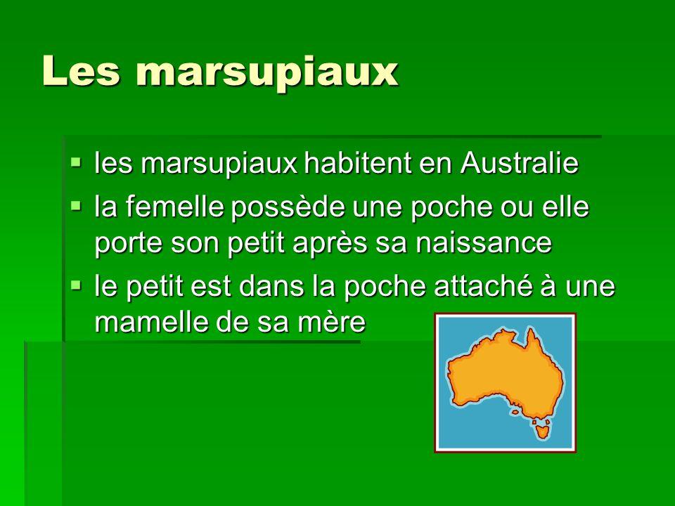 Les marsupiaux les marsupiaux habitent en Australie