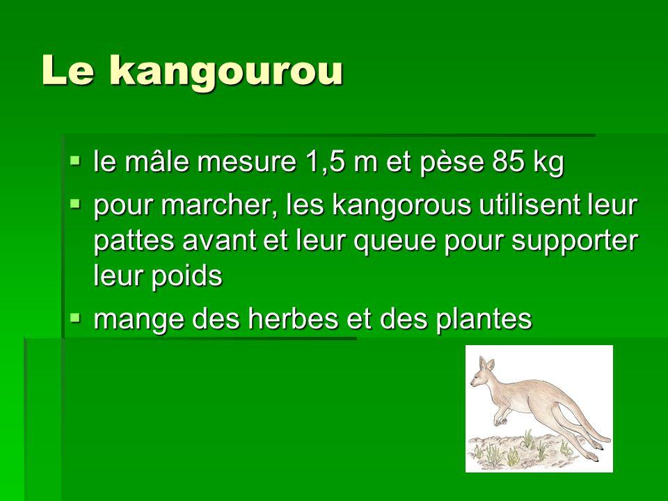 Le kangourou le mâle mesure 1,5 m et pèse 85 kg