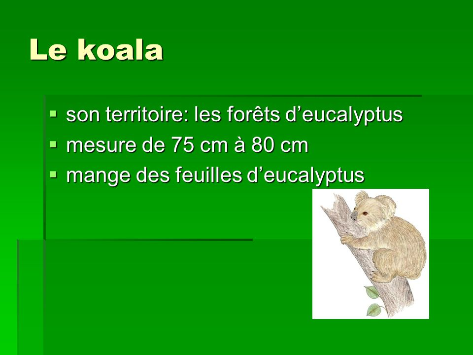 Le koala son territoire: les forêts d'eucalyptus