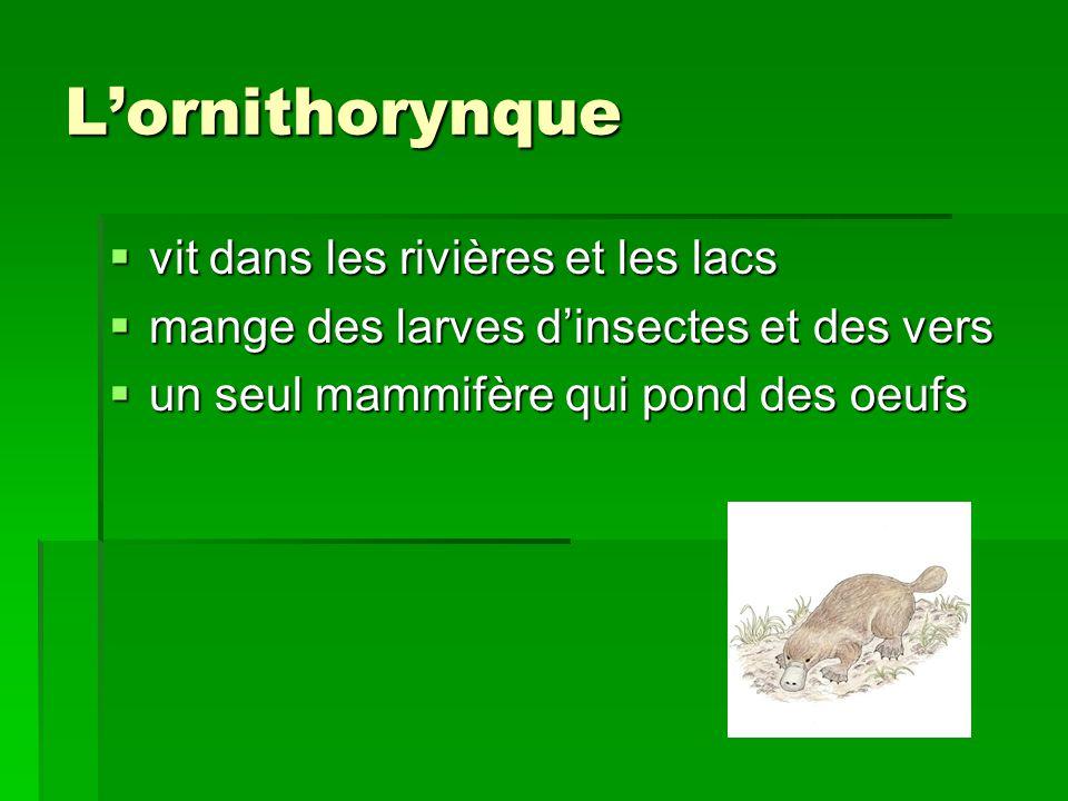 L'ornithorynque vit dans les rivières et les lacs