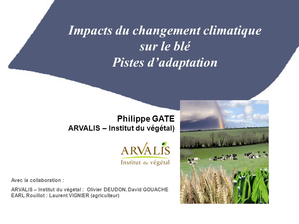 Impacts du changement climatique sur le blé Pistes d'adaptation