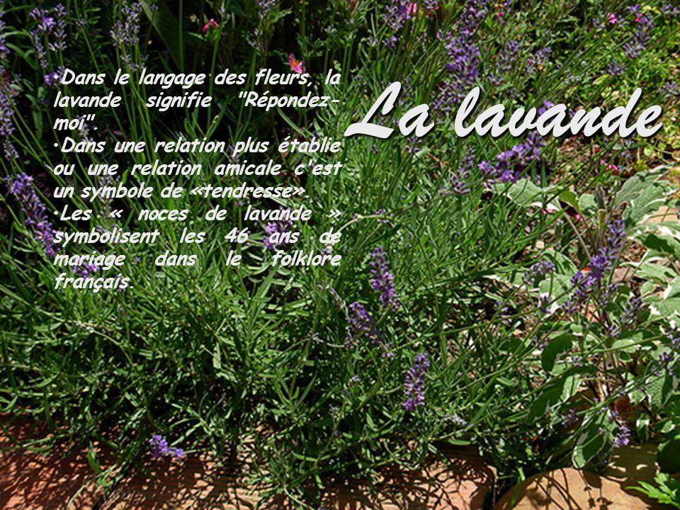 La lavande Dans le langage des fleurs, la lavande signifie Répondez-moi .