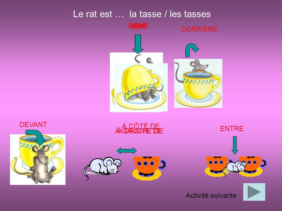 Le rat est … la tasse / les tasses