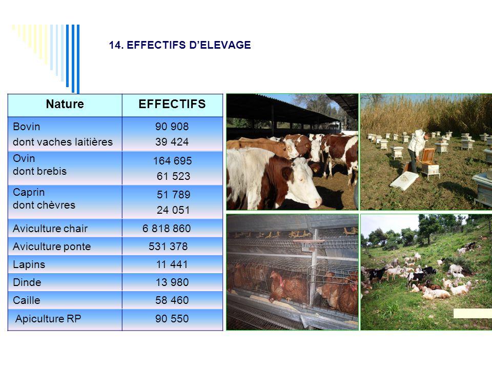 14. EFFECTIFS D'ELEVAGE Nature EFFECTIFS Bovin dont vaches laitières