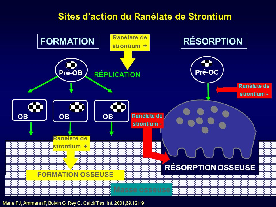 Sites d'action du Ranélate de Strontium