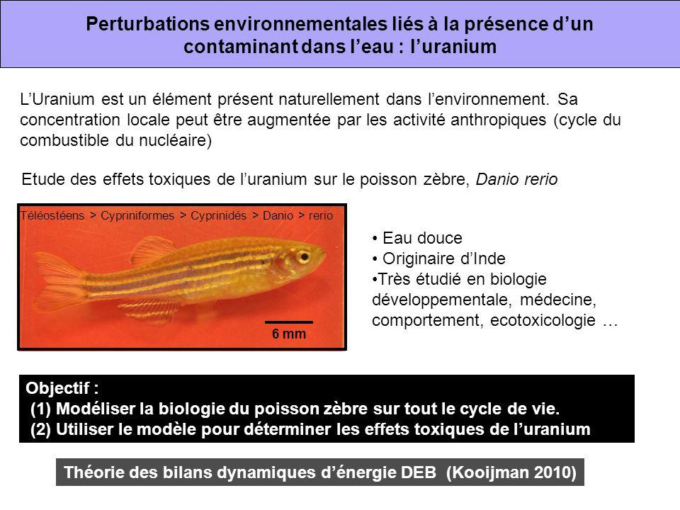 Perturbations environnementales liés à la présence d'un contaminant dans l'eau : l'uranium