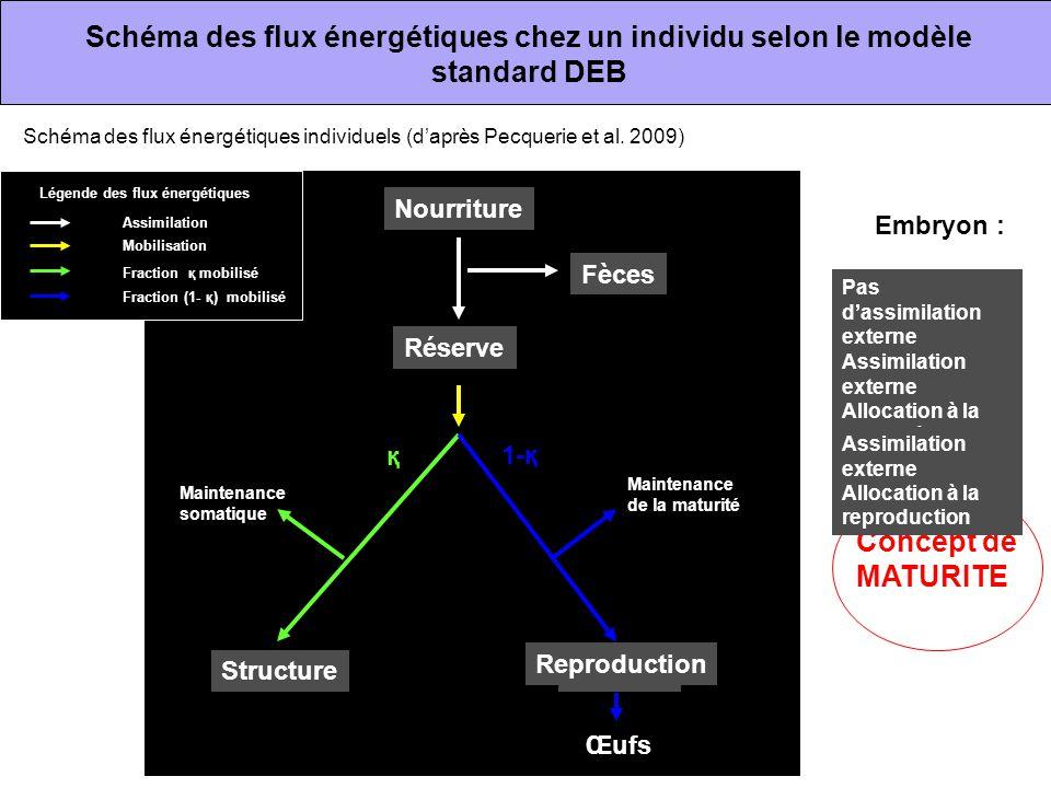 Schéma des flux énergétiques chez un individu selon le modèle standard DEB