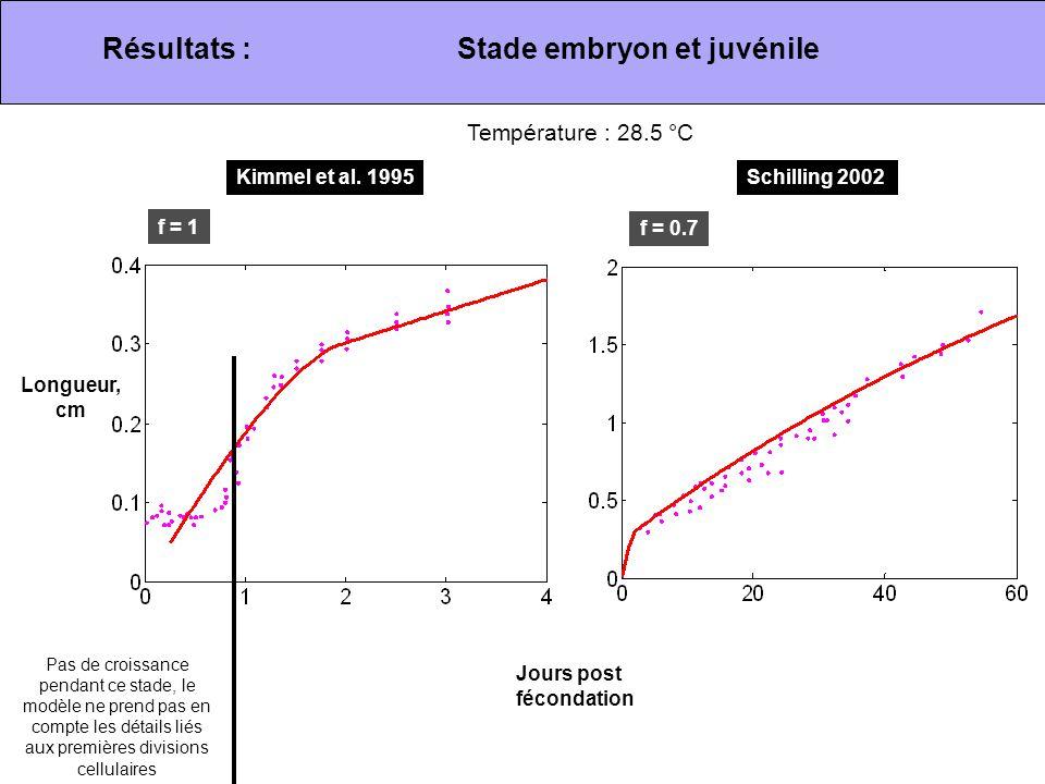 Stade embryon et juvénile