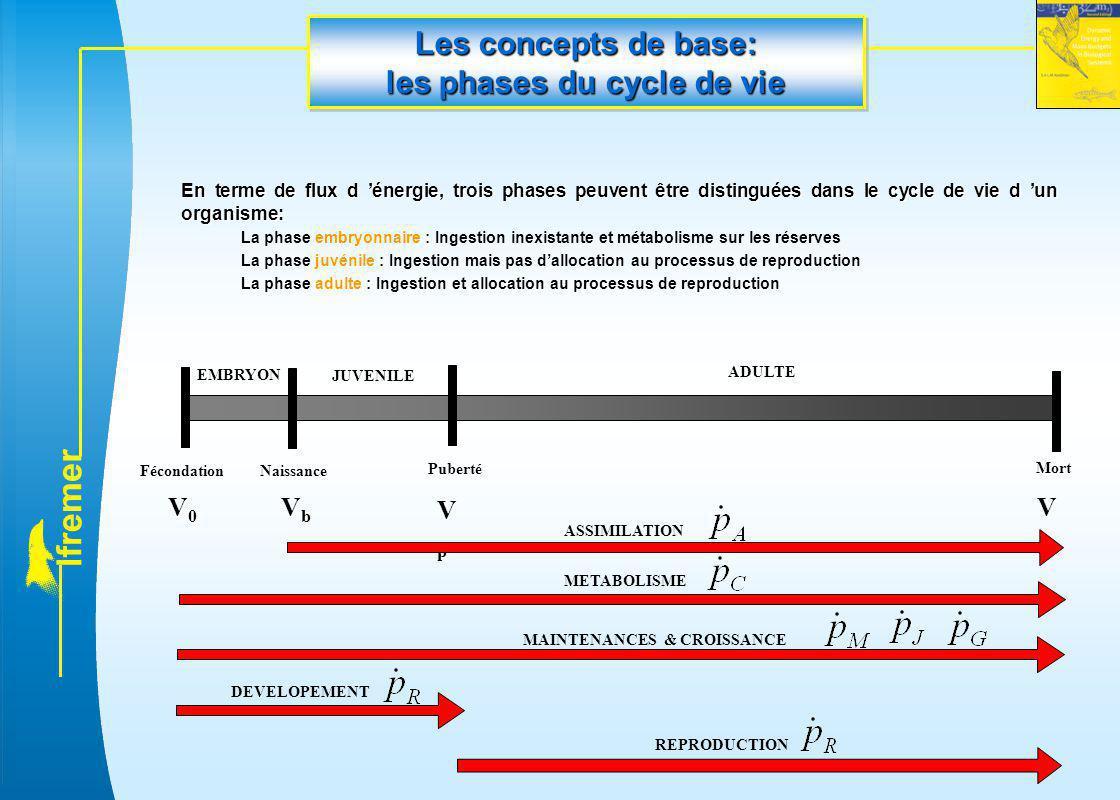 Les concepts de base: les phases du cycle de vie