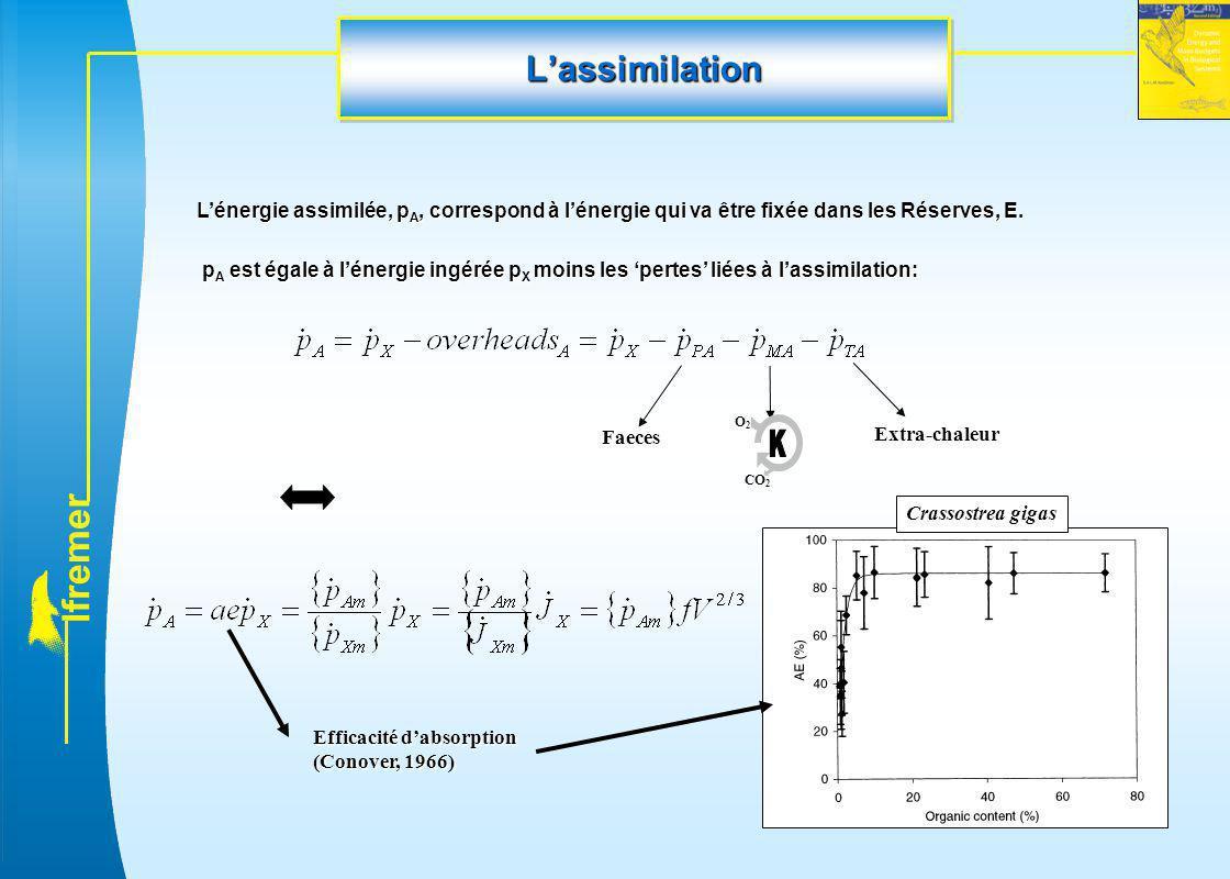 L'assimilation L'énergie assimilée, pA, correspond à l'énergie qui va être fixée dans les Réserves, E.