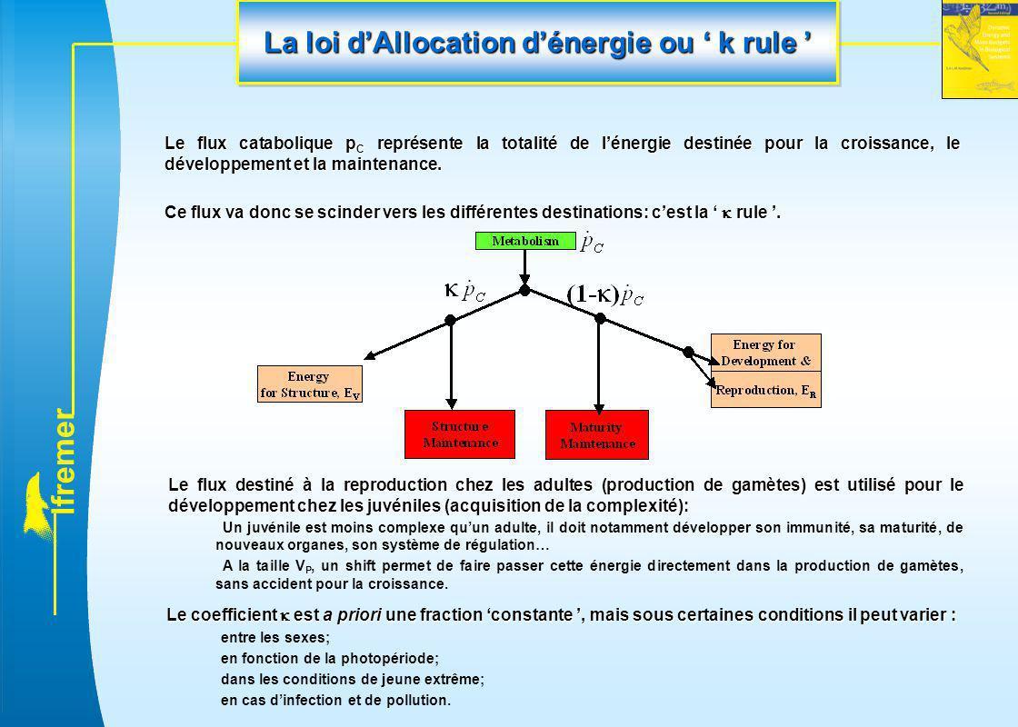 La loi d'Allocation d'énergie ou ' k rule '