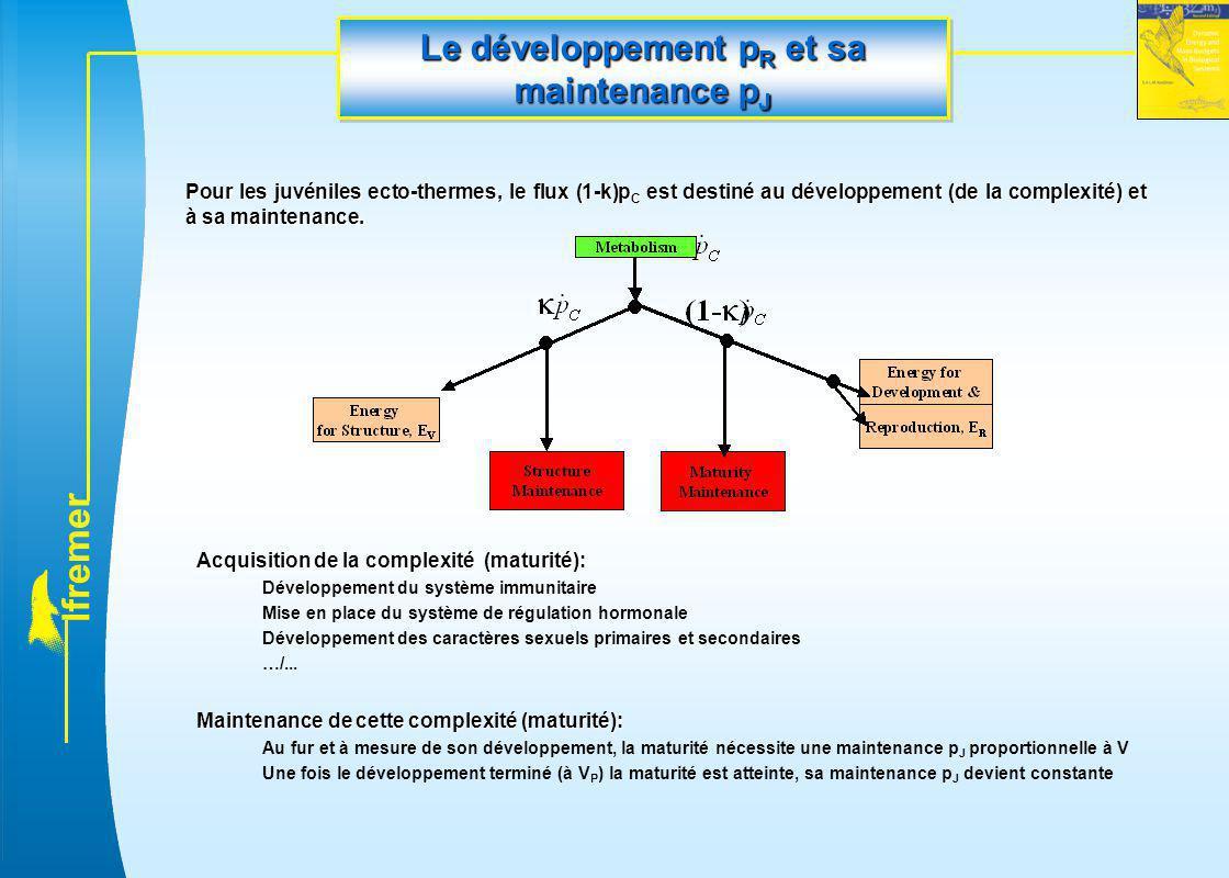 Le développement pR et sa maintenance pJ