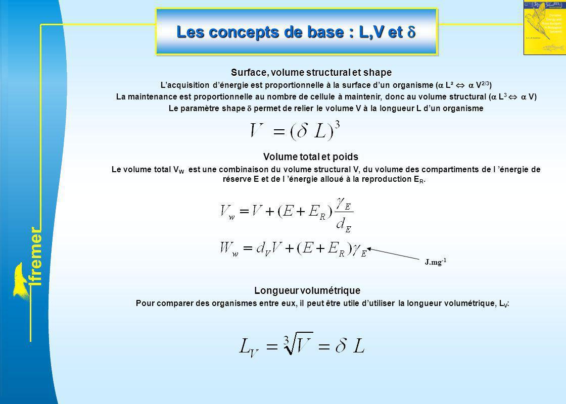 Les concepts de base : L,V et 