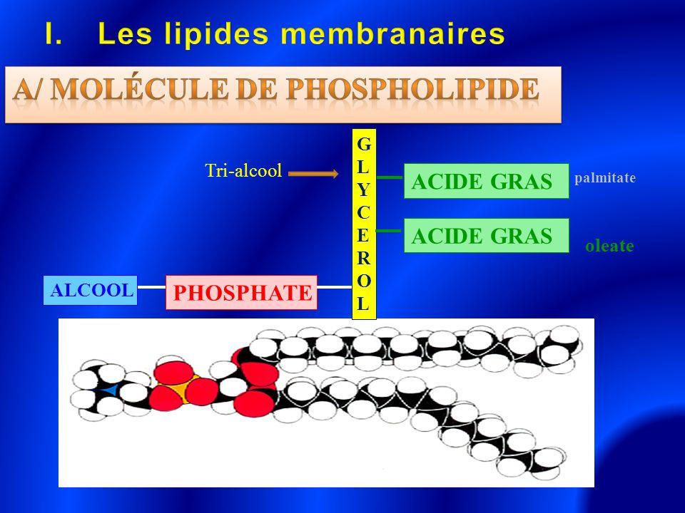 Les lipides membranaires