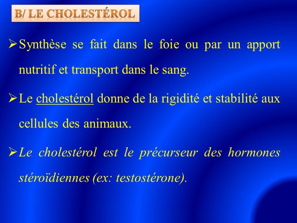 b/ le cholestérol Synthèse se fait dans le foie ou par un apport nutritif et transport dans le sang.