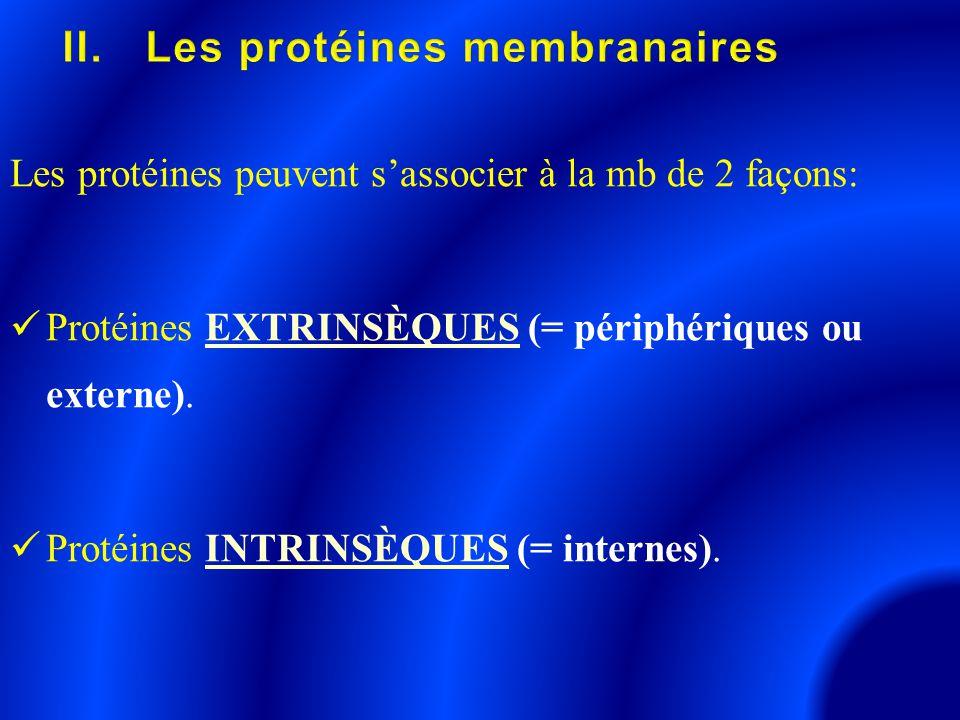 II. Les protéines membranaires