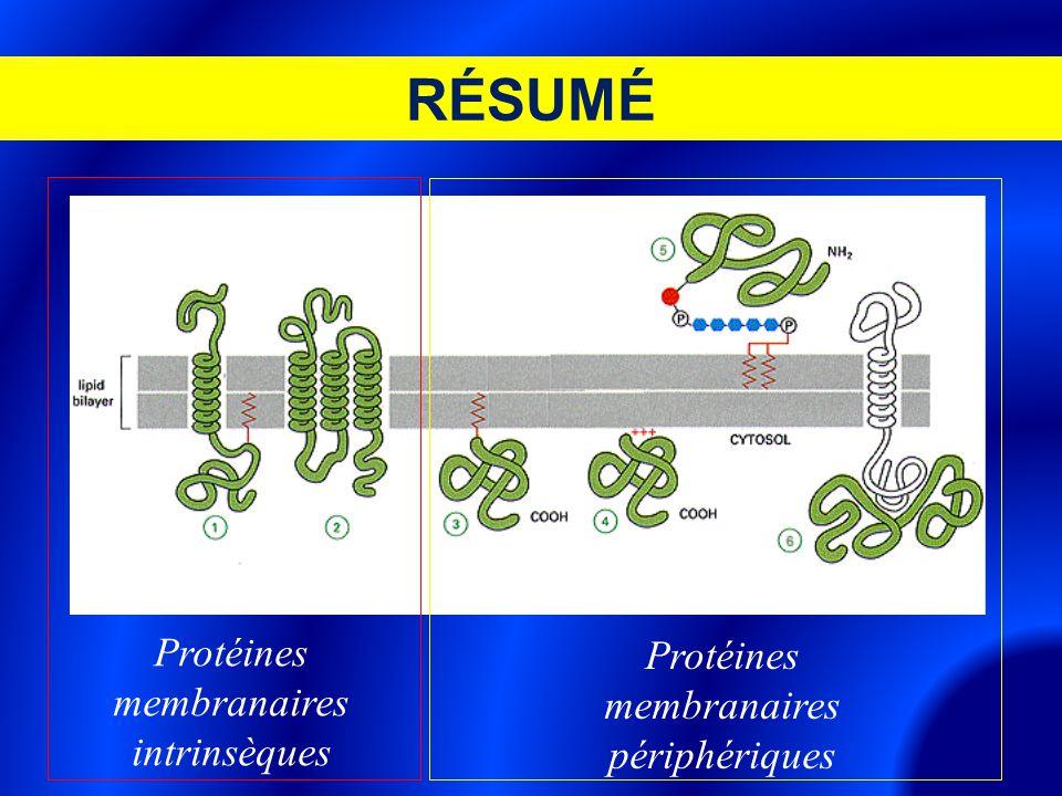 RÉSUMÉ Protéines membranaires intrinsèques