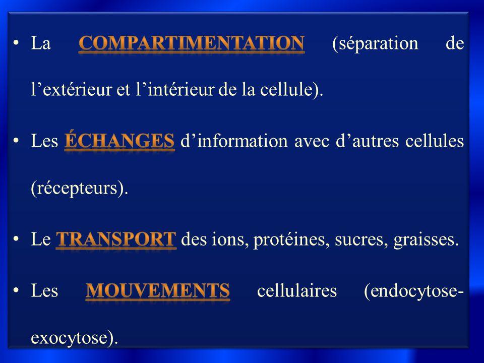 La compartimentation (séparation de l'extérieur et l'intérieur de la cellule).