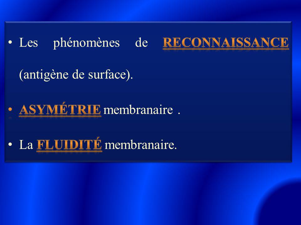 Les phénomènes de reconnaissance (antigène de surface).