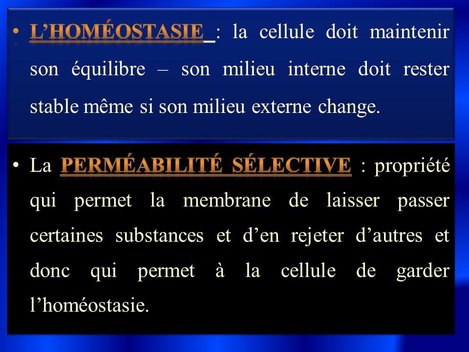 L'homéostasie : la cellule doit maintenir son équilibre – son milieu interne doit rester stable même si son milieu externe change.