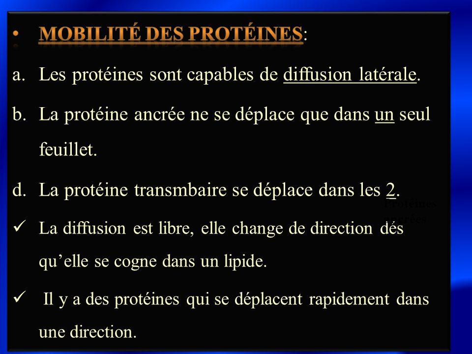 Mobilité des protéines: