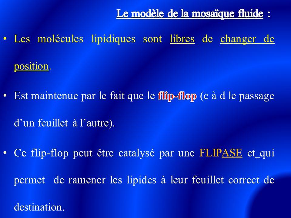 Le modèle de la mosaïque fluide :