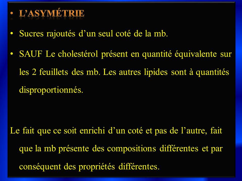 L'asymétrie Sucres rajoutés d'un seul coté de la mb.
