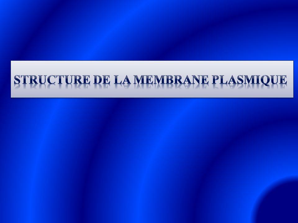 Structure de la membrane plasmique