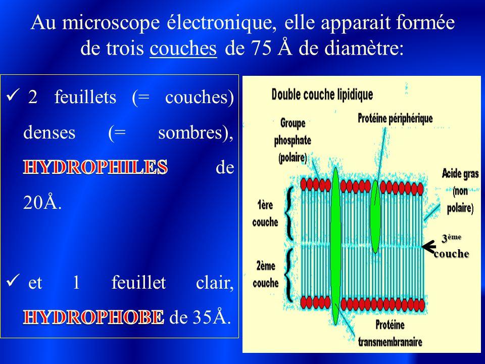 Au microscope électronique, elle apparait formée de trois couches de 75 Å de diamètre: