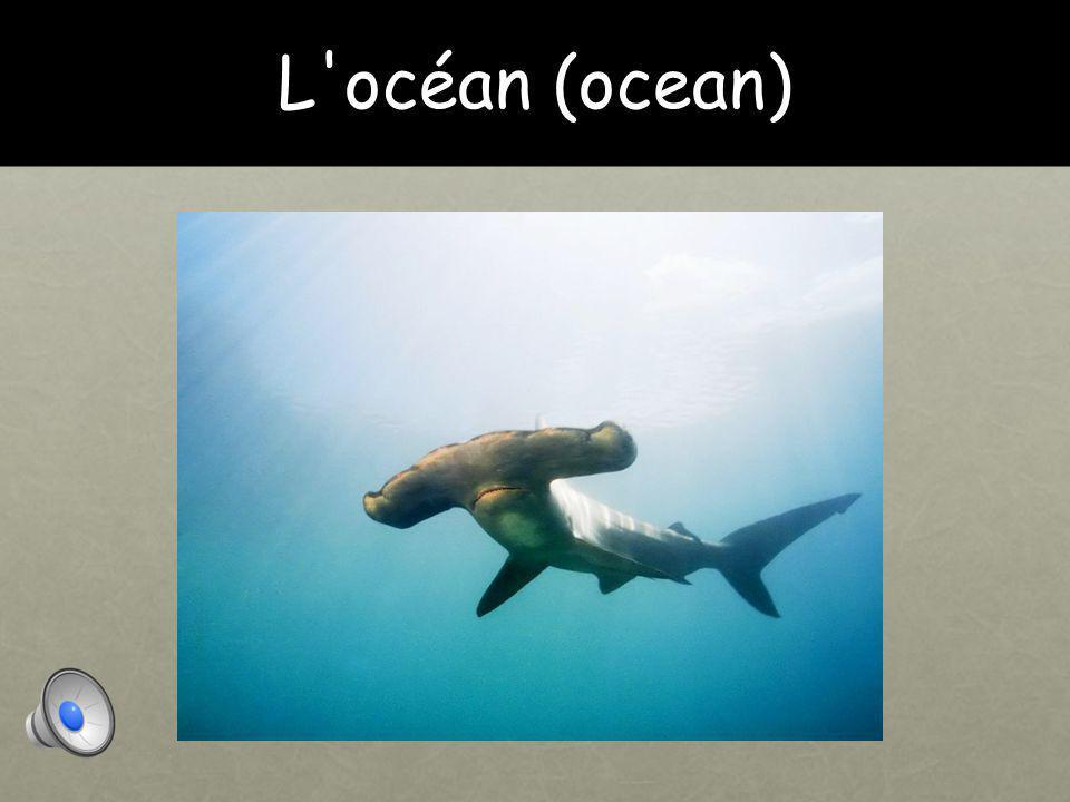 L océan (ocean)