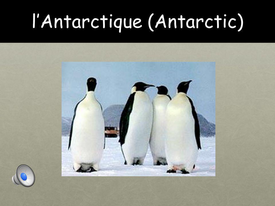 l'Antarctique (Antarctic)